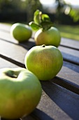 'Bramley' apples (cooking apples, UK) out of doors