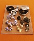Assorted mushrooms on leather