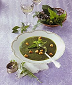 Herb soup with croutons