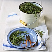 Freshly picked samphire