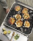 Scallops with herb pesto on charcoal
