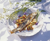Fried trout on rhubarb and peppers