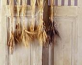 Bunches of cereals hanging on a wooden door