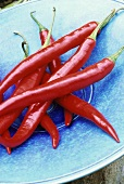 Red chillies on turquoise plate