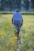 Man in a paddy field