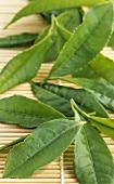 Tea leaves (Camellia sinensis) on straw mat