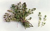A bunch of flowering thyme