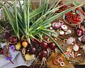 Onion still life