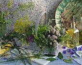 Stillleben mit verschiedenen Kräutern in einem Korb und Vase