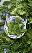 Fresh spinach leaves on and around a plate