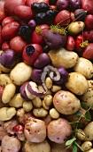 Various varieties of potatoes, full-frame