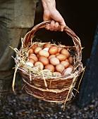Freshly laid hens' eggs in basket