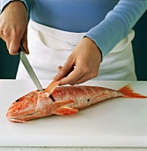 Man cutting the fins off a red snapper