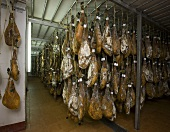 Ham drying in a shop, De Jabugo la Canada (Jabugo, Spain)