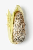 Cuitlacoche (smut infected corn cob, Mexico)