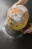 Panettone (traditional yeast cake), Lombardy, Italy