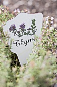Thyme in a garden (with a sign)