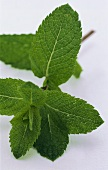 A sprig of fresh mint