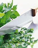 Chopping mint leaves