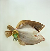 Plaice - one with scales and one descaled