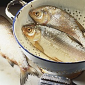 Fresh whitefish in a colander
