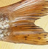 Fish tail, close-up