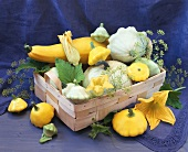 Various types of squash and fennel seedheads