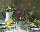 Flowering chives, chamomile, thyme, tarragon, lemons
