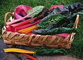 Rainbow chard in a woven basket