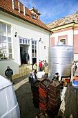 Weinlese beim Weingut Arvay Winery, Tokaj, Ungarn
