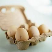 Sechs Eier in der Eierschachtel