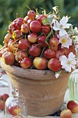 Ornamental apples in flowerpot