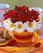Rote Nelken & Frühlingsmargeriten in Blumentopf als Tischdeko