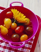 Various types of tomatoes and marigold in colander