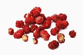 Beeren des Ährigen Erdbeerspinat(Chenopodium Capitatum)
