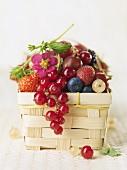 Ein Körbchen mit verschiedenen Beeren