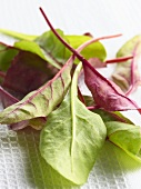 Young leafy vegetables