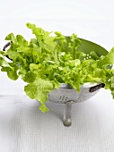 Oak leaf lettuce in a colander