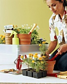 Young woman potting on flowering plants