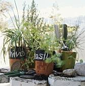 Various kitchen herbs and garden plants