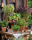 Verschiedene Basilikumsorten in Töpfen auf einem Holztisch