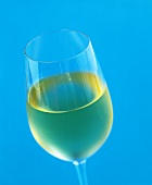 A glass of white wine against a turquoise background