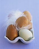 Eggs in an egg holder with feathers