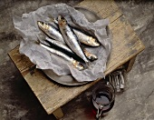 Still life with sardines in paper on pewter plate