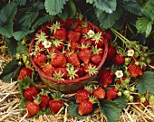 Freshly picked strawberries in basket