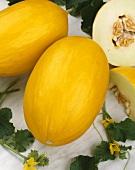 Yellow honeydew melons