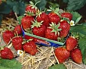 Ripe strawberries in cardboard punnet