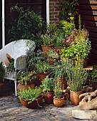 Terrace with garden herbs