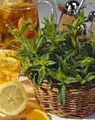 Fresh mint in a basket