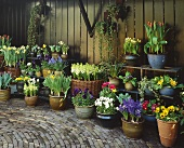 Spring flowers in baskets and pots